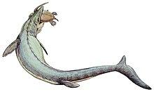Rekonstruktion av en art i släktet Mosasaurus med byte