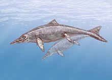 Rekonstruktion av en fisködla tillhörande släktet Shastasaurus