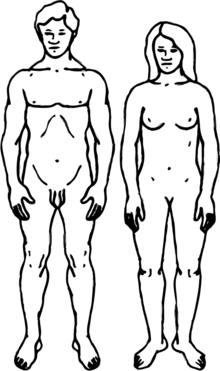 Human-gender-neutral.png