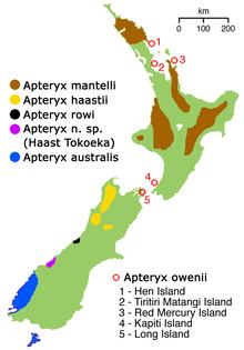 Kiviernas utbredning på Nya Zeeland