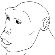 Sahelanthropus tchadensis