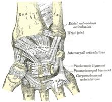 Handledens ligament.