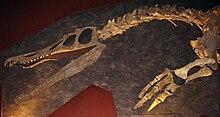 Baryonyx, detalj, i Natural History Museum, London.