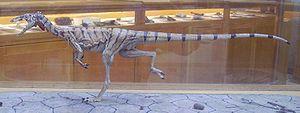 Modell av Compsognathus longipes.
