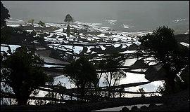 Risodlingar i Yuanyang.