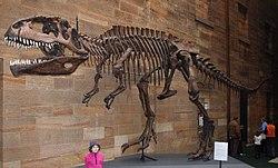 Skelett av Giganotosaurus