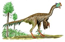 teckning som visar hur Gigantoraptor erlianensis skulle ha sett ut