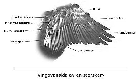 Beskrivning av vingen