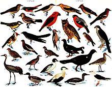 Olika fåglar